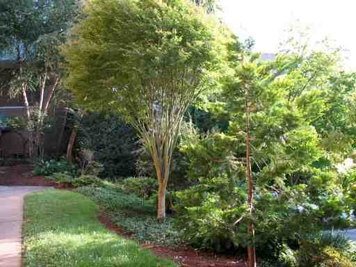Photos of Winston-Salem YMCA gardens by John Newman